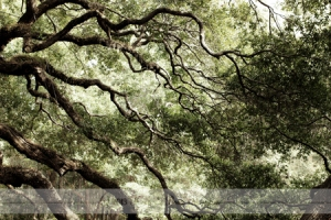 Angel Oak Park Johns Island