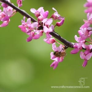 bee in blooming tree