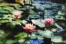 Monet digital impressionism