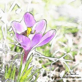 watercolorcrocus_72