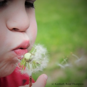 dandilion wishes