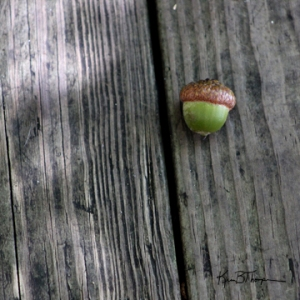 acorn alone_72wm