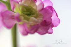 macro canon flowers