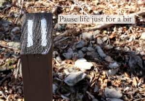 hike pause nature