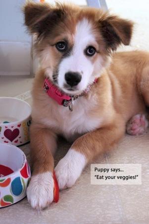 kbt_puppy_veggies_72