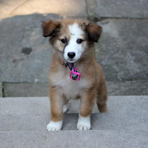puppy_10x10